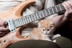 Red kitten asleep in the arms of men. Playing the guitar royalty free stock photography