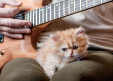 Red kitten asleep in the arms of men. Playing the guitar stock photos