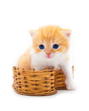 Red kitten in a  basket Royalty Free Stock Image