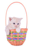 Red kitten in basket Royalty Free Stock Photo