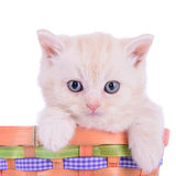 Red kitten in basket Stock Images