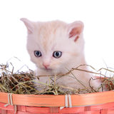 Red kitten in basket Royalty Free Stock Images