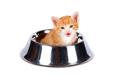 Red kitten in the big bowl for a forage. On a white background Stock Photography