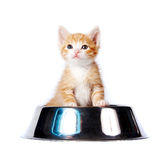Red kitten in the big bowl for a forage Royalty Free Stock Images
