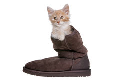 Red kitten in boot Stock Photos