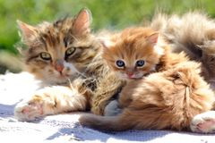 Red kitten with a cat Stock Photo