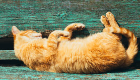 Red kitten cat sleeps on a bench in park Royalty Free Stock Images