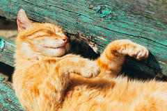 Red kitten cat sleeps on a bench in park Stock Image