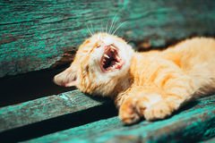 Red kitten cat sleeps on a bench in park Stock Images