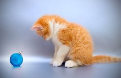 Red kitten with a Christmas toy Royalty Free Stock Photo