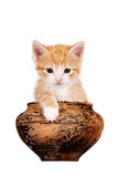Red kitten in a clay pot Royalty Free Stock Photography