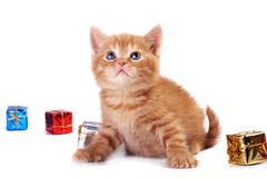 Red Kitten and A Gift Box Stock Photography