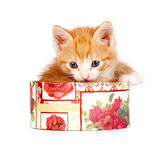 Red kitten in a gift box. On a white background Royalty Free Stock Photos