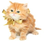 Red kitten with gold bow. On a white background Royalty Free Stock Photo