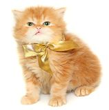 Red kitten with gold bow Stock Photos