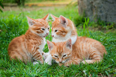 Red kitten in grass Stock Photos