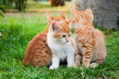 Red kitten in grass Royalty Free Stock Photography