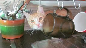kitten hid behind the cups stock images
