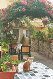 Red kitten inside Greek traditional patio with Royalty Free Stock Photo