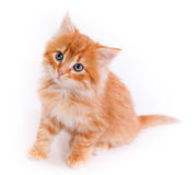 Red kitten isolated on a white background. Small cute Red kitten isolated on a white background Stock Photos