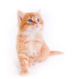 Red kitten isolated on a white background. Small cute Red kitten isolated on a white background Stock Photo
