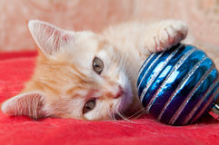 Red kitten lays on a red with a Christmas toy Royalty Free Stock Photography