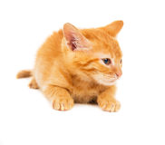 Red kitten lies is dissatisfied Royalty Free Stock Photography