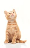 Red kitten looking up on white background. Red kitten looking up isolated on white background Stock Photography