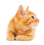 Red kitten looks in the side Royalty Free Stock Photography