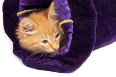 Red kitten in magic hat Royalty Free Stock Photos