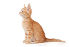 Red kitten. One red kitten on a white isolated background look looks to the left Royalty Free Stock Images