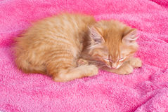 Red kitten on the pink towel Royalty Free Stock Images