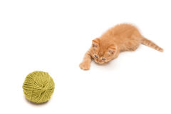 Red kitten playing with green clew Royalty Free Stock Photography