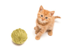 Red kitten playing with green clew Royalty Free Stock Images