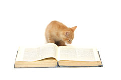 Red kitten reading a book Royalty Free Stock Photos