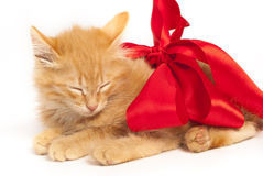 Red kitten with red ribbon Royalty Free Stock Photography