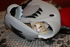 Kitten resting in his house royalty free stock images