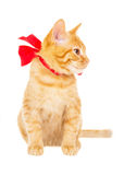 Red kitten with ribbon Stock Photos