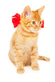 Red kitten with ribbon Royalty Free Stock Image