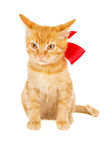 Red kitten with ribbon Royalty Free Stock Photography