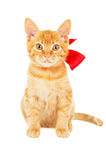 Red kitten with ribbon Royalty Free Stock Images