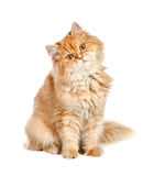 Red kitten sitting with his head sideways Stock Photography