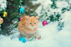 Red kitten sitting near Christmas tree Royalty Free Stock Photo