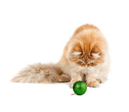Red kitten sitting plays new year's green ball Royalty Free Stock Photography