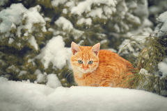 Red kitten sitting on the snow Royalty Free Stock Photos