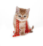 Red kitten sitting in a tree on the white beads Stock Photo