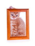 Red kitten sitting at a wooden frame Royalty Free Stock Photos