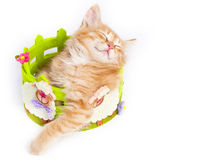 Red kitten with smile Stock Image