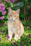 Red kitten on spring flowers Royalty Free Stock Image