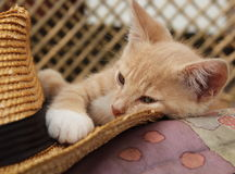 RED KITTEN AND STRAW HAT ON THE BENCH Stock Photography